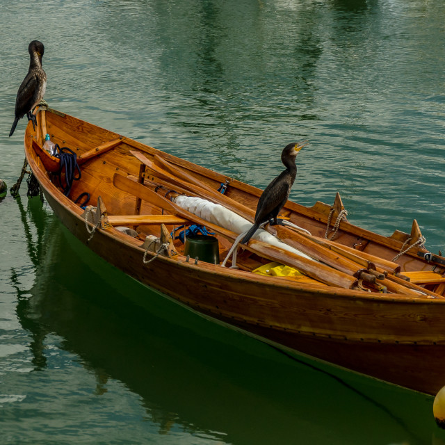 """""""2 birds on a boat"""" stock image"""