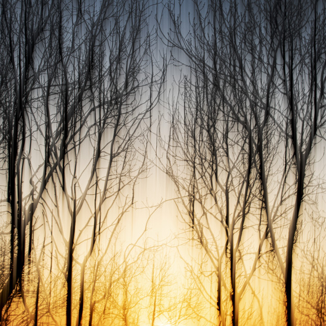 """Sunset through the trees"" stock image"