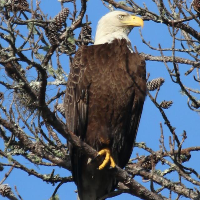 """""""Eagle"""" stock image"""