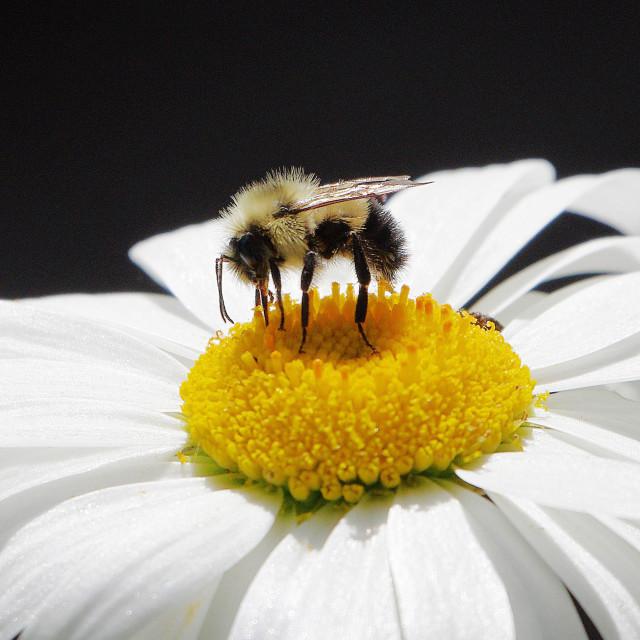 """Pure Nectar"" stock image"