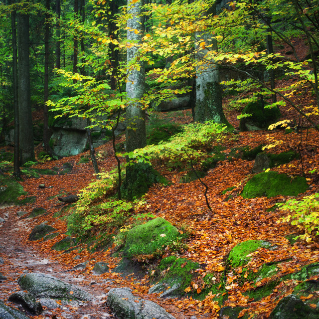 """Autumn Forest in the Mountains"" stock image"