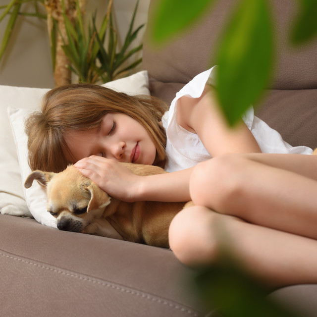 """Little girl sleeping peacefully holding her dog on sofa"" stock image"