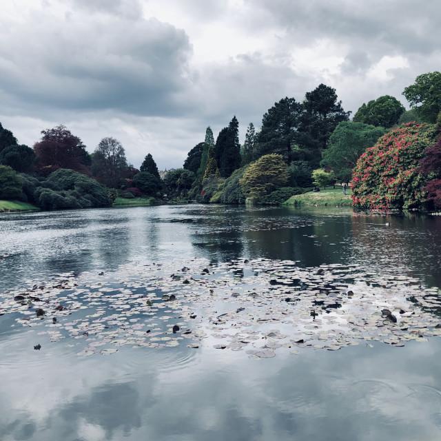 """""""Grey skies at Sheffield Park"""" stock image"""