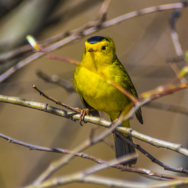 """""""Finch"""" stock image"""