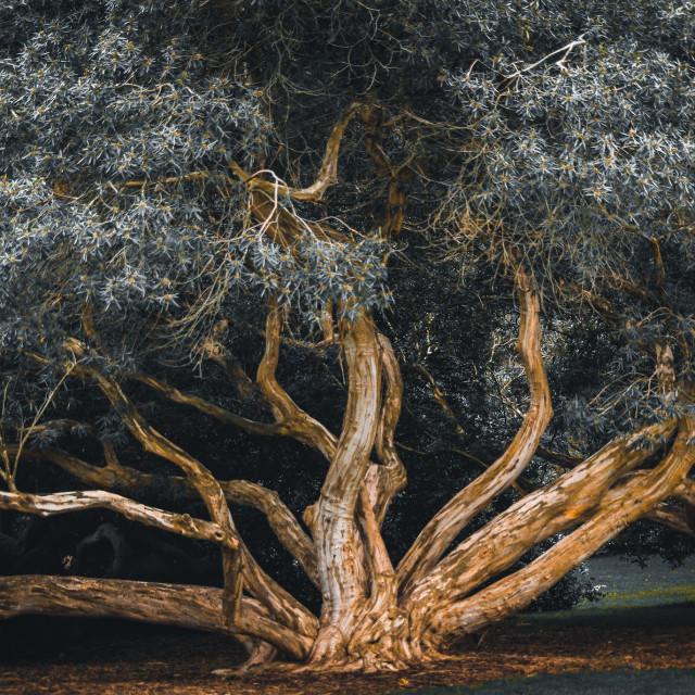 """Moody Tree"" stock image"