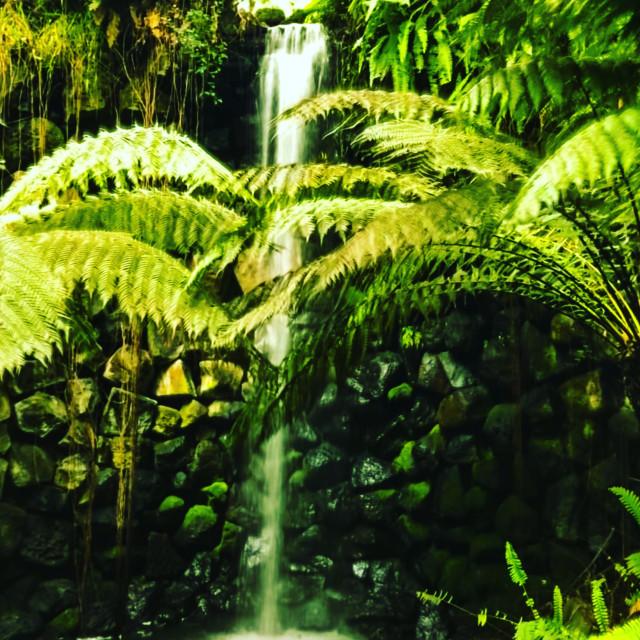 """Waterfall at the botanical gardens"" stock image"