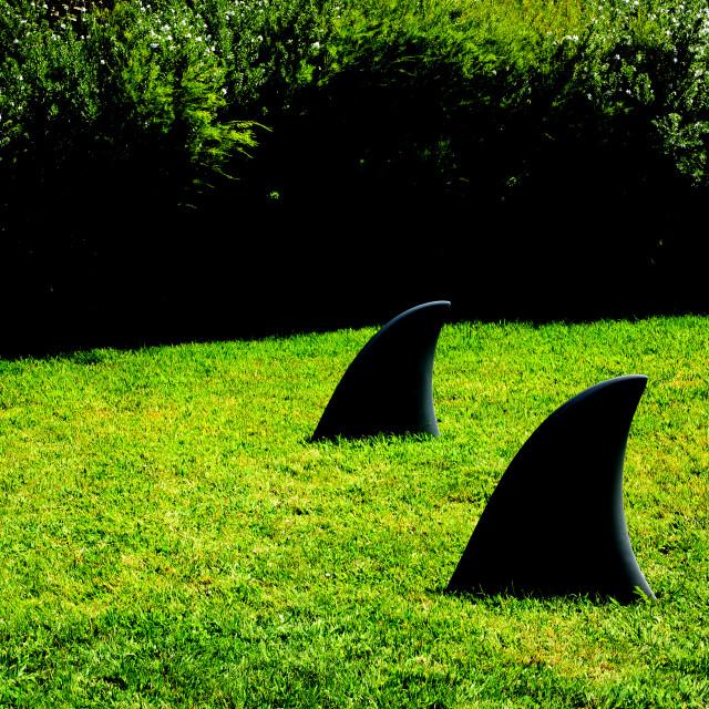 """Shark Fins on the lawn outside the Villa Serralves in Oporto, Portugal"" stock image"