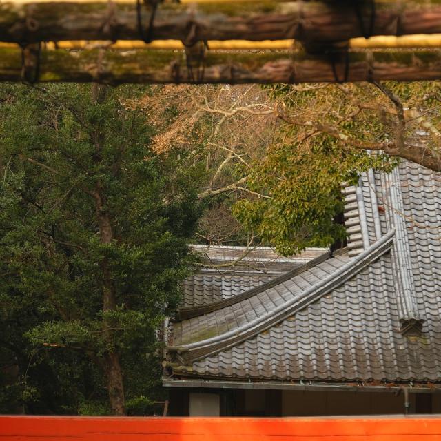 """Kasuga Taisha, Nara, Japan"" stock image"