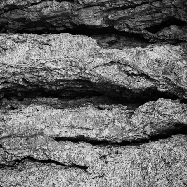 """""""Abstract Tree Bark"""" stock image"""