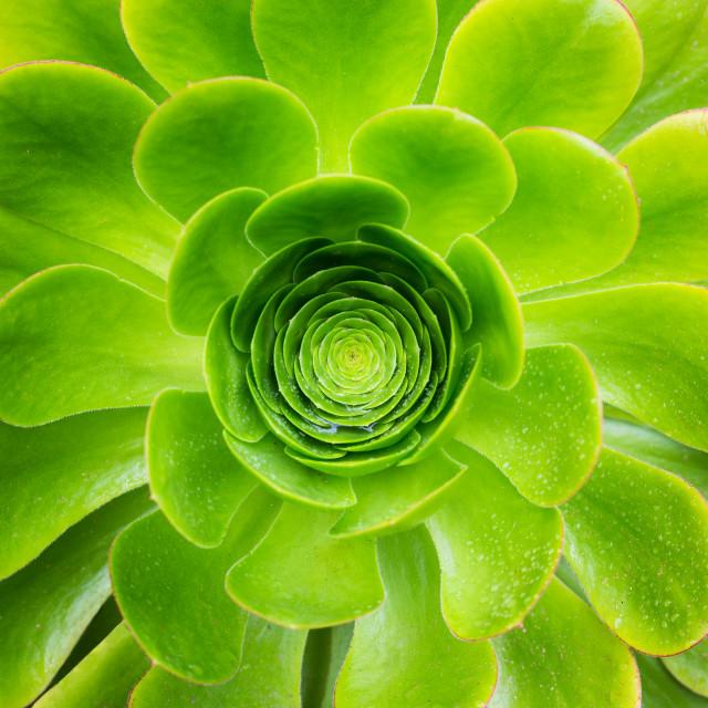 """""""Succulent - Tresco"""" stock image"""