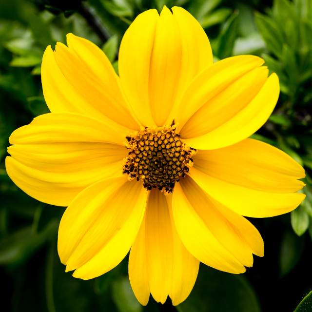"""""""Close Up of Yellow Flower Head"""" stock image"""