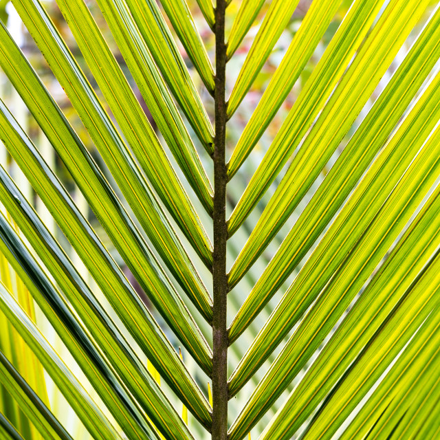 """""""Abstract of Palm Leaves"""" stock image"""