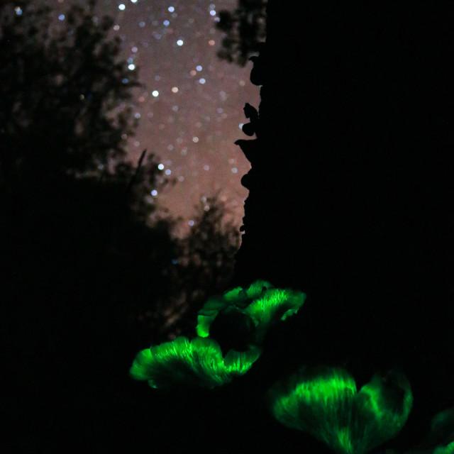 """Glow in the dark mushroom"" stock image"