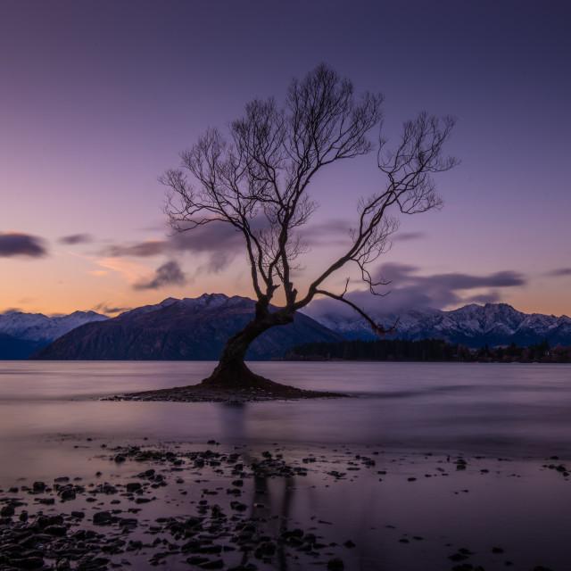 """""""That Wanaka Tree"""" stock image"""
