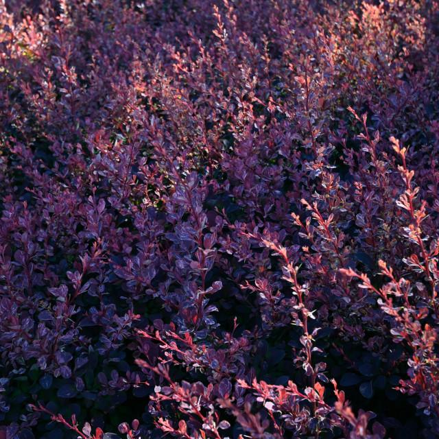 """Light Illuminating The Blooms"" stock image"