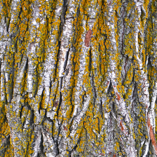 """""""Beautiful Texture on a Tree Trunk"""" stock image"""