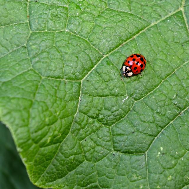 """The Lady Bug"" stock image"