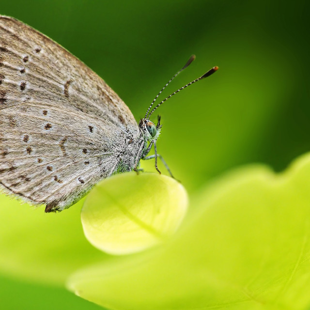 """""""Butterfly 01"""" stock image"""