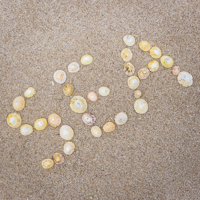 """Shells Spell Sea"" stock image"