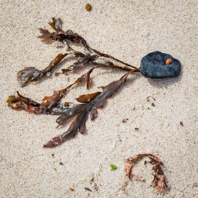 """Seaweed Fish"" stock image"