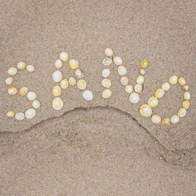 """Shells Spell Sand"" stock image"