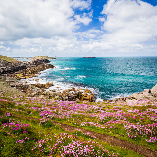 """""""Heather in Flower on Bryher"""" stock image"""
