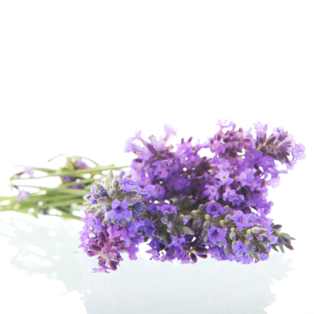 """Bouquet Purple Lavender"" stock image"
