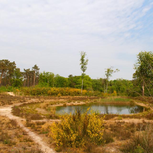 """Nature landscape Netherlands"" stock image"