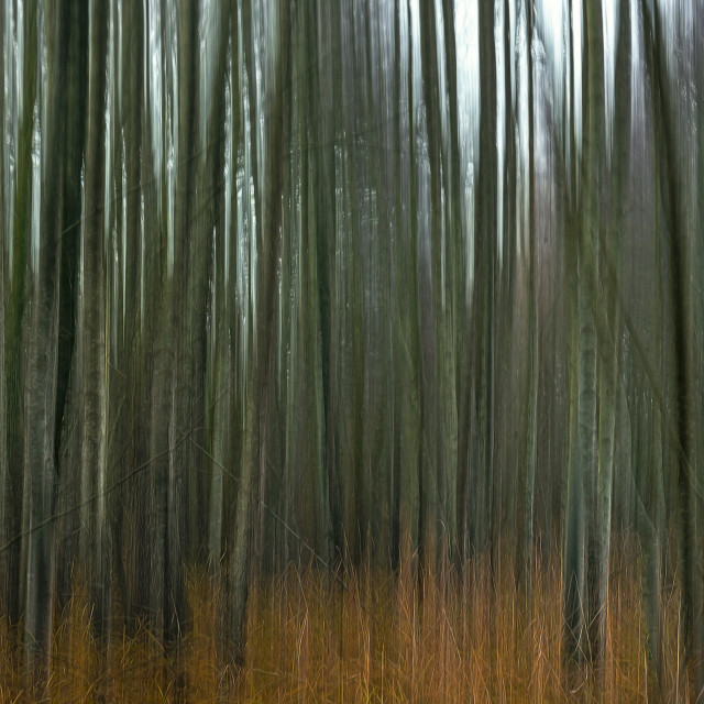 """""""Abstract forest landscape. Motion blur trees background"""" stock image"""