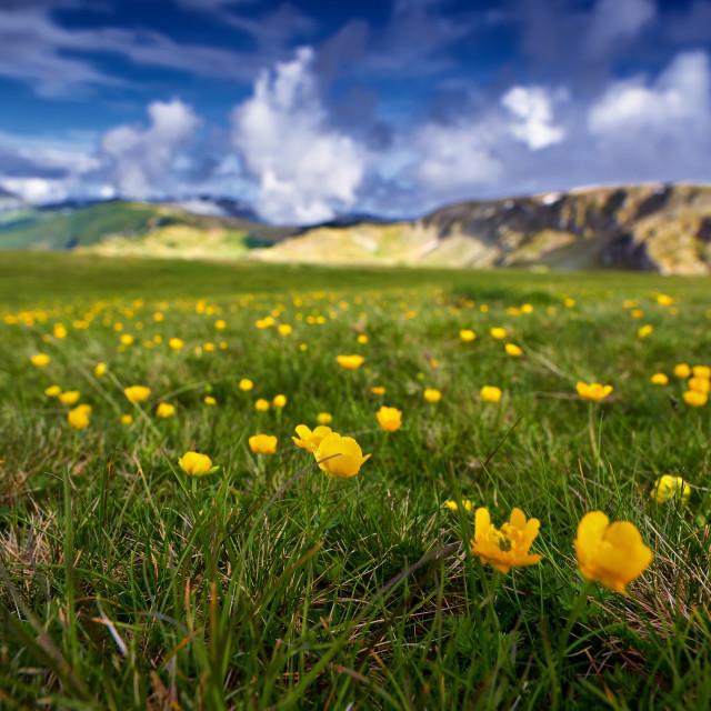 """Yellow flowers on mountain"" stock image"