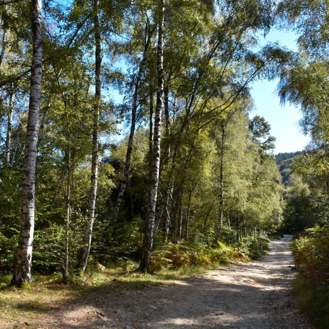 """Woodland Walk from Stresa Mottarone"" stock image"