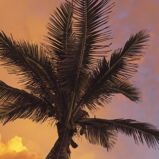"""""""Up close palm on a colourful sunset"""" stock image"""