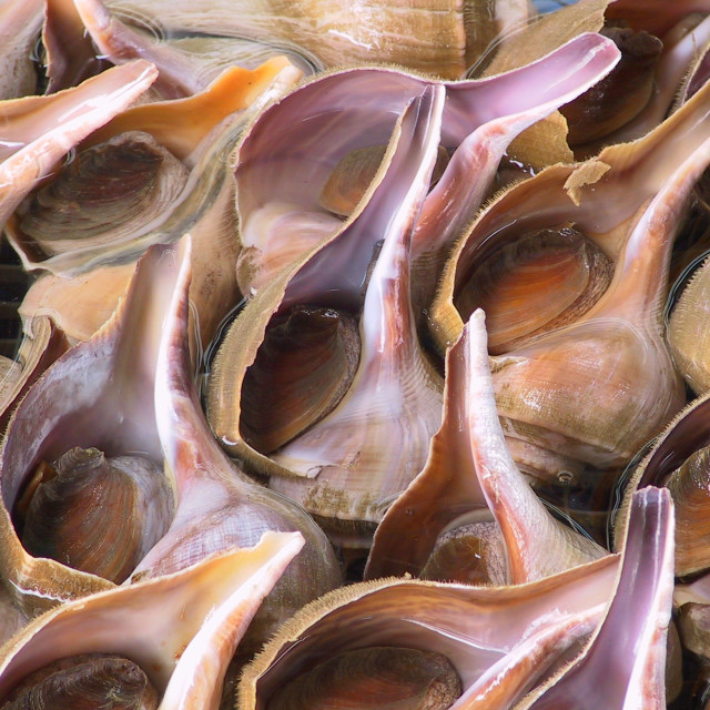 """Whelks in Sai Kung"" stock image"