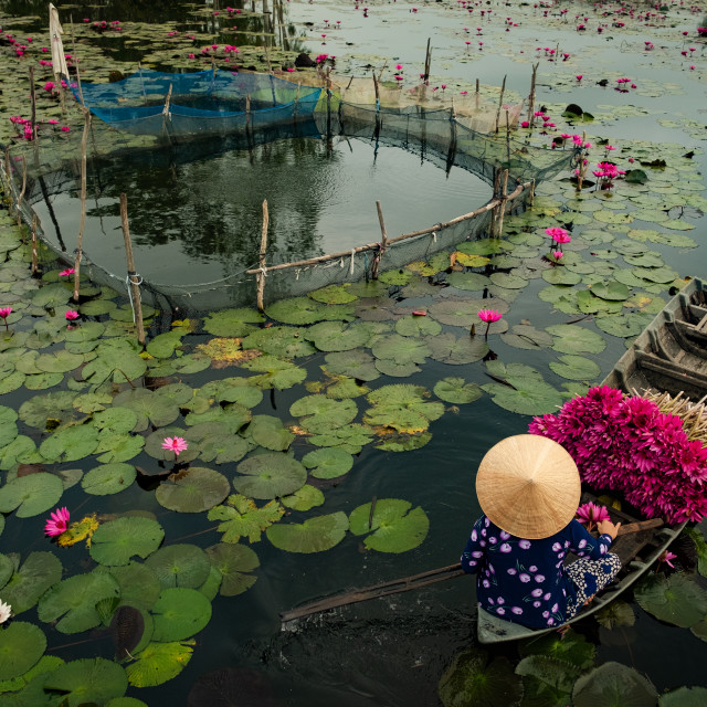 """""""Harvesting Water Lilies"""" stock image"""