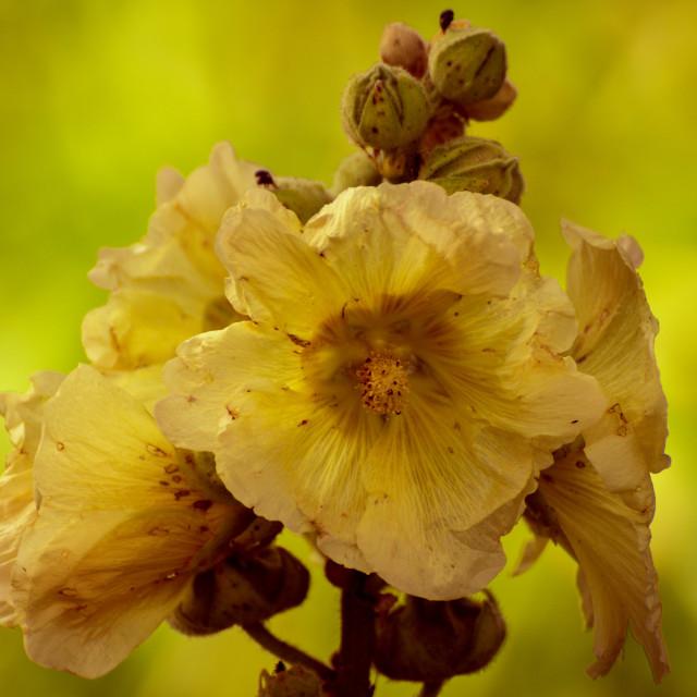 """""""Yellow summerflower"""" stock image"""