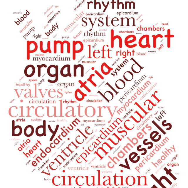 """""""Illustration of a word cloud representing features of the heart"""" stock image"""