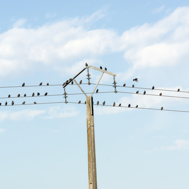 """""""Sparrows on the line"""" stock image"""
