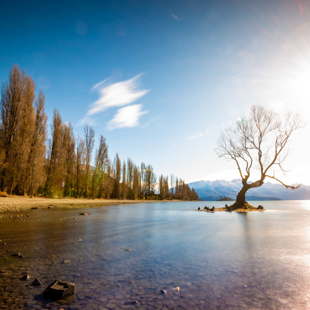 """That Wanaka Tree"" stock image"