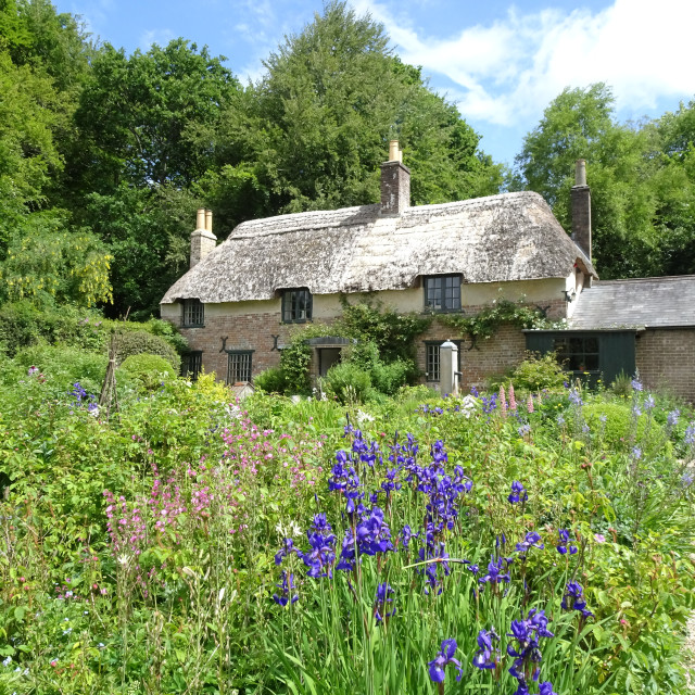"""Thomas Hardy's Cottage, Dorset"" stock image"