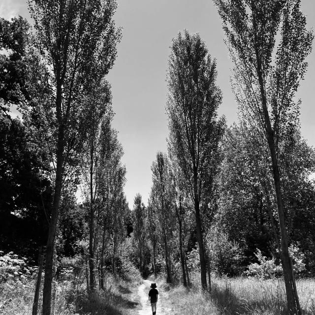 """""""Sissinghurst Lake Walk"""" stock image"""