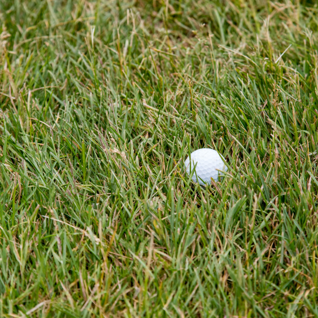 """""""Golf Ball in the Rough Grass"""" stock image"""