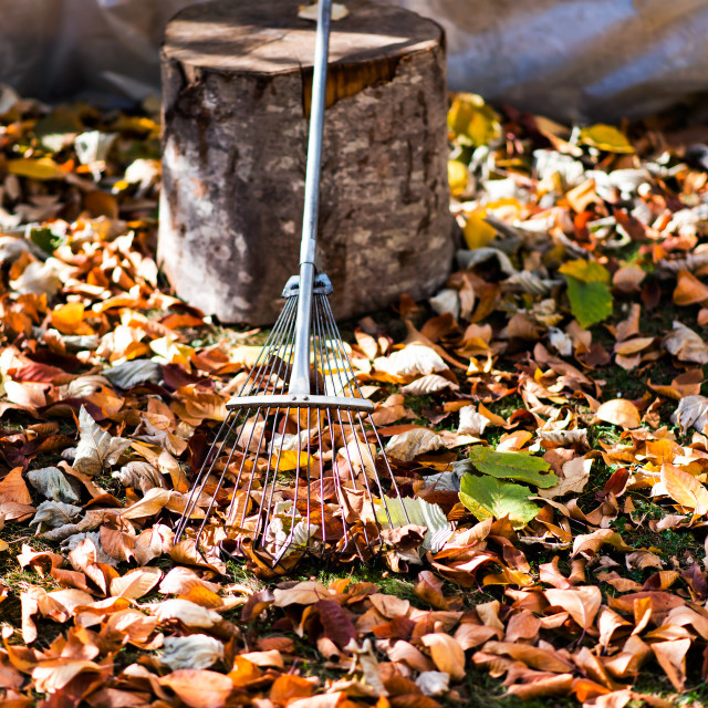 """""""Pile of fallen autumn leaves in the yard"""" stock image"""