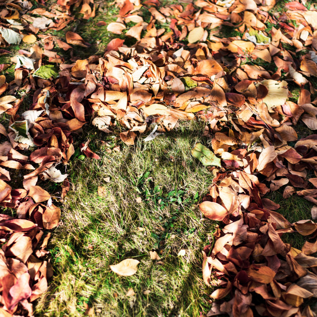 """""""Fallen autumn leaves in the yard with cleaning mark"""" stock image"""