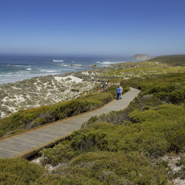 """Seal Bay Boardwalk, Kangaroo Island"" stock image"