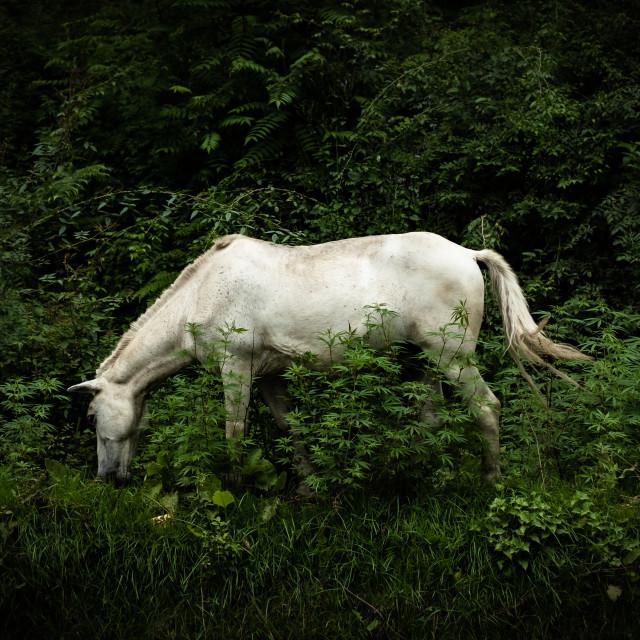 """""""Unicorn"""" stock image"""