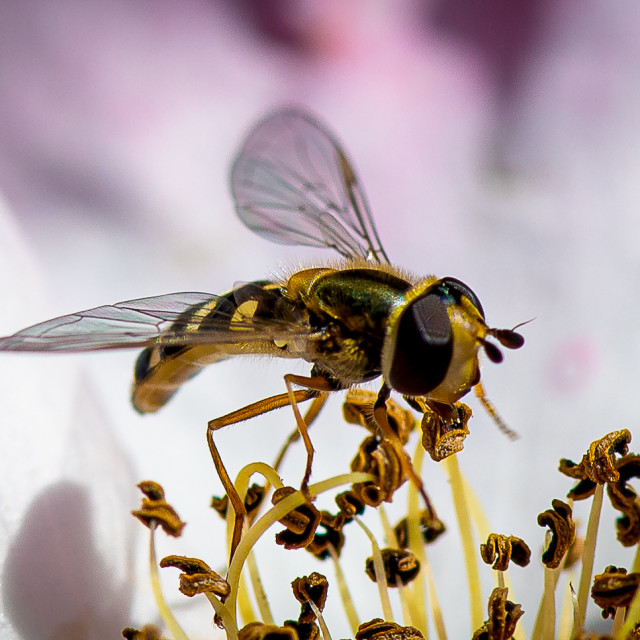 """""""Hover Fly 3"""" stock image"""