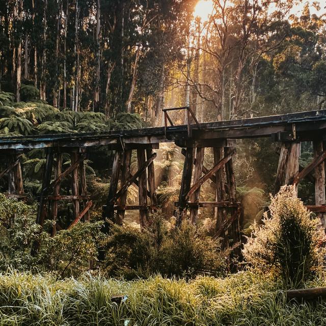 """Old train tracks in the Dandenong's"" stock image"