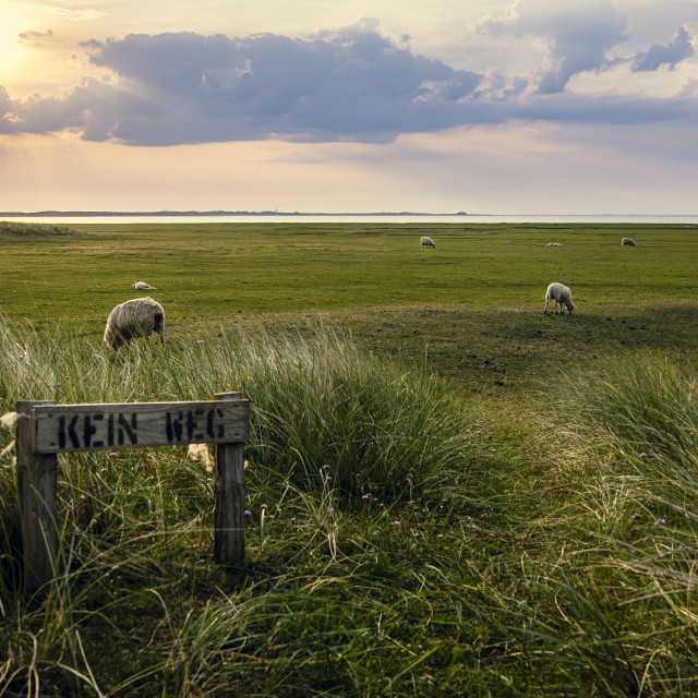 """""""Landscape on Sylt Island at sunrise. Nature reserve in the Wadden Sea"""" stock image"""