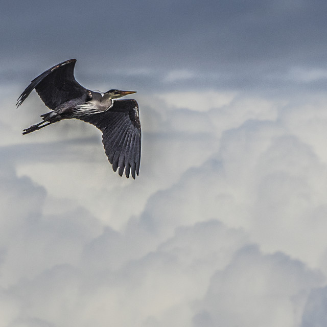 """""""Soaring Above The Clouds"""" stock image"""
