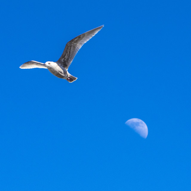 """""""Moon In Tow"""" stock image"""
